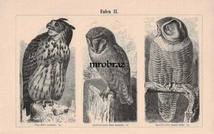 Antique Bird Print, Vintage Bird Illustration, Owls Print, Eagle Owl, Barn Owl,