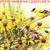Yellow Finch & Flowers Cross Stitch Pattern***LOOK***