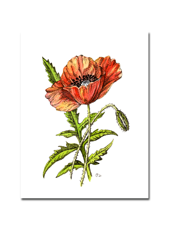 POPPIES 2 botanical stippling watercolor ink painting Sandrine Curtiss ORIGINAL