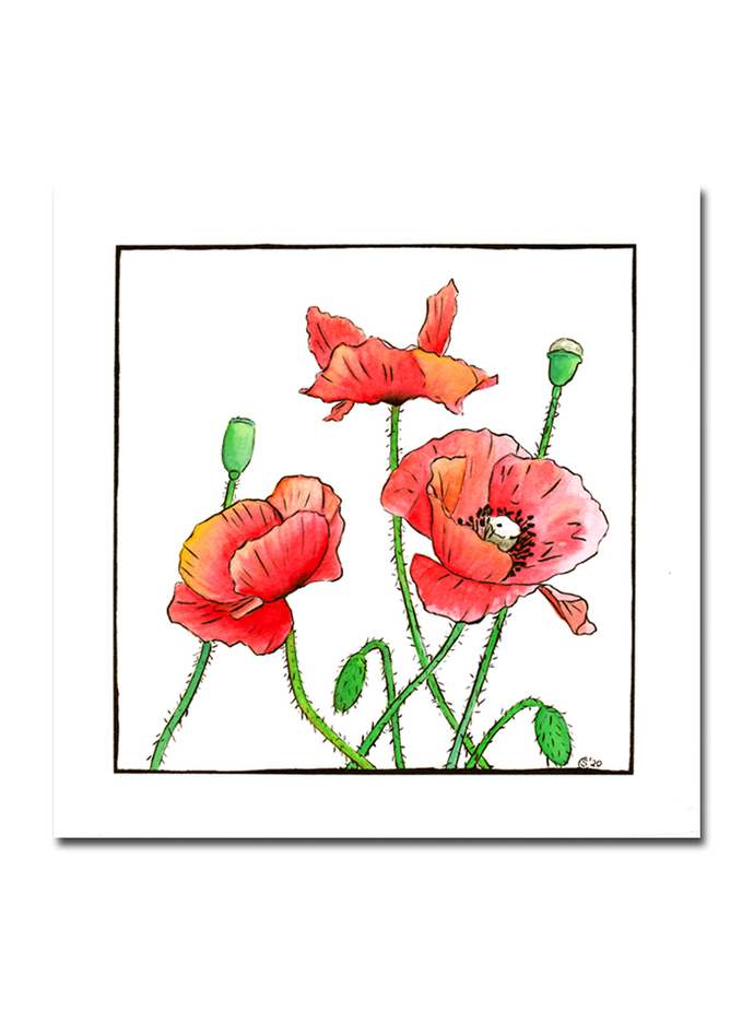 POPPIES  botanical red flower watercolor ink painting Sandrine Curtiss ORIGINAL