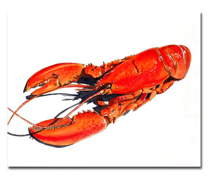LOBSTER crustacean Maine seafood ink painting Sandrine Curtiss ORIGINAL Art