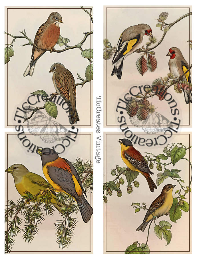 British Birds and Florals Vintage Printable Junk Journal Cards TlcCreations