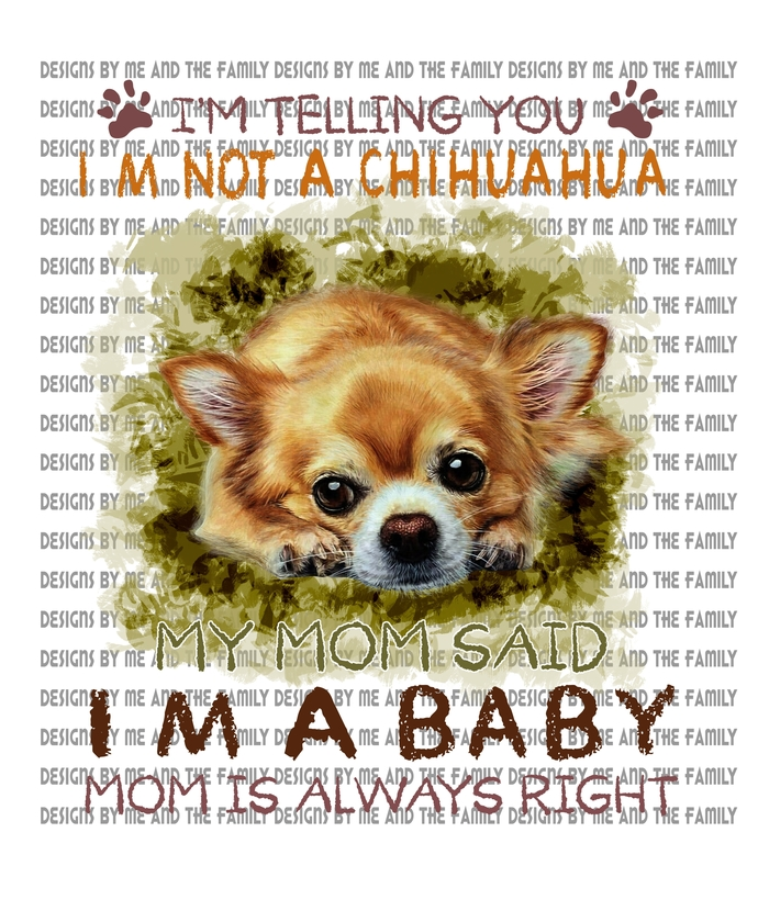 I'm telling you i'm not a Chihuahua, my Mom said i'm a baby, Mom is always