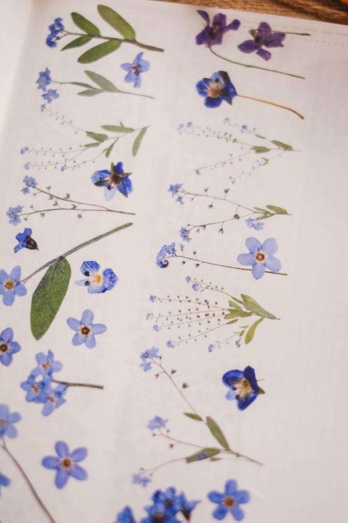 London Gifties original design - Pressed Flowers III - 5cm wide Japanese washi