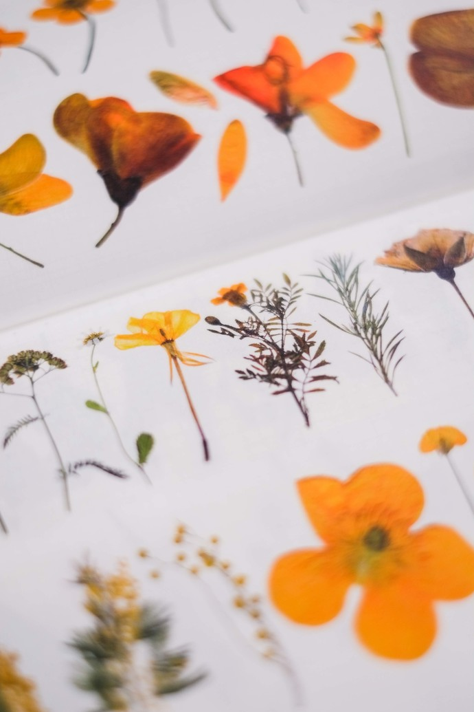 London Gifties original design - Pressed Flowers IV - 5cm wide Japanese washi