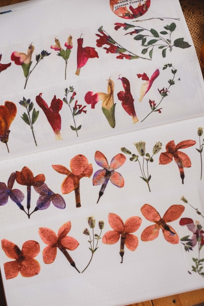 London Gifties original design - Pressed Flowers V - 5cm wide Japanese washi