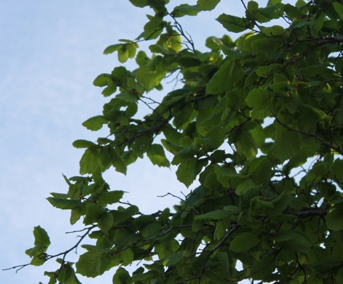 Photo tree branches 2