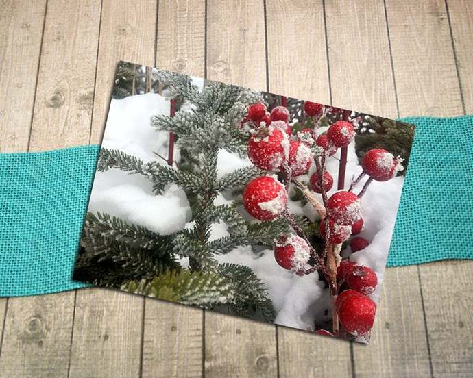 Holiday Berries Fine Art Photography Postcard, Winter, Christmas, Red and Green,