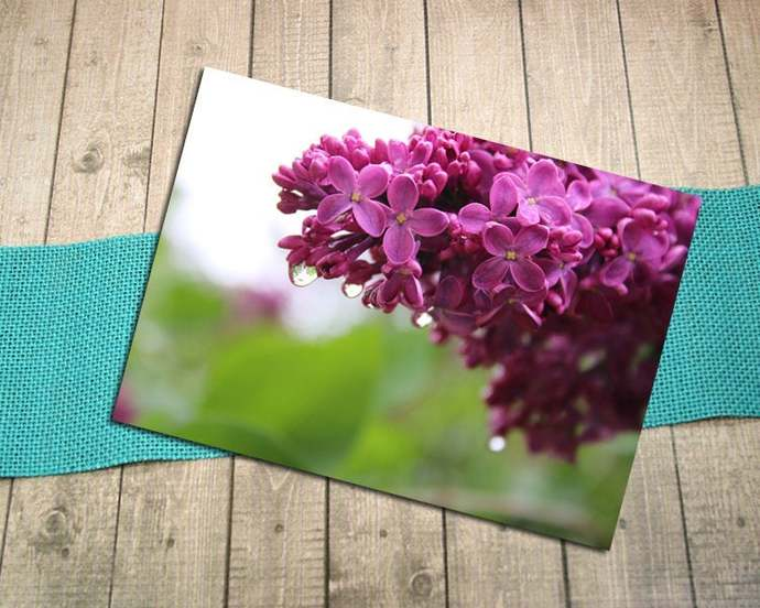 Lilac Raindrops Fine Art Photography Postcard, Spring, Flowers, May, Blooming,