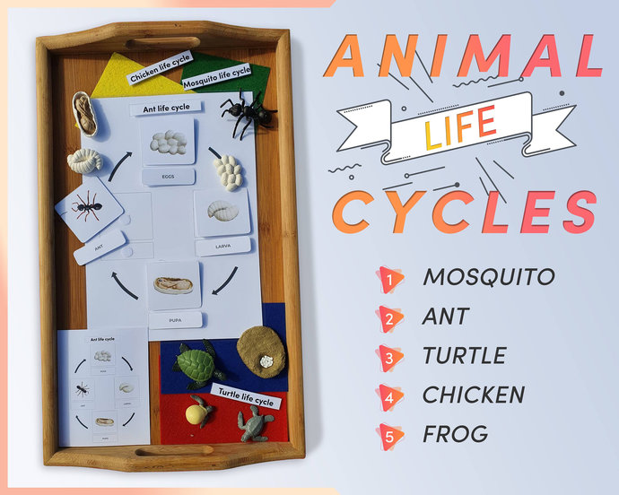 LIFE CYCLES of animals with figurines * 3 part Montessori cards * Nature