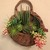 Wall Pocket with Faux Succulents