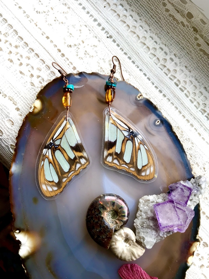 ☀️Real Siproeta Stelenes Malachite Butterfly 🦋 wing earrings