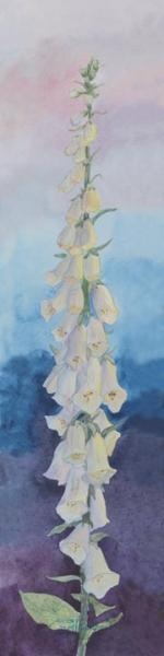 """White Foxglove"" Canvas Giclee Print Flower by Carol Thompson"