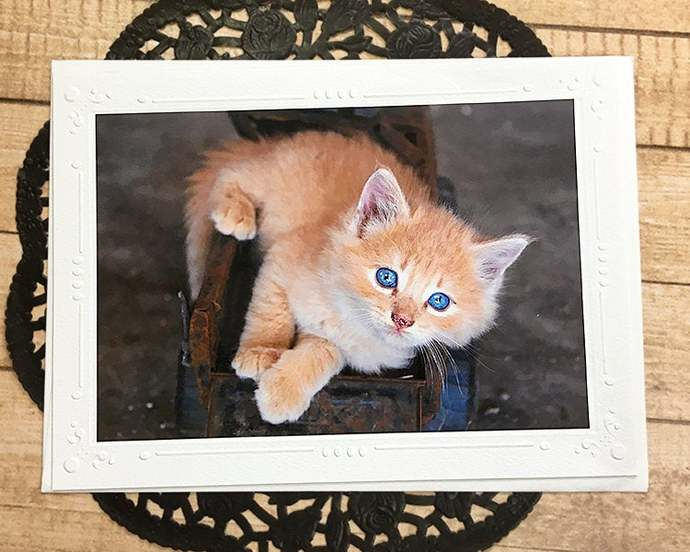 Glitter Accent Big Blue Eyes Fine Art Photography Card, Kitten, Farm, Country,