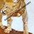 """24"""" Inch Marble Coffee Table top Pietra Dura Semi Precious Stones Tiger Inlay"""