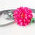Pink Flower Ribbon Neckwear, Tie Collar for Cats, Pet Accessories, Pet Photo