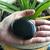 Black Tourmaline protection palm stone