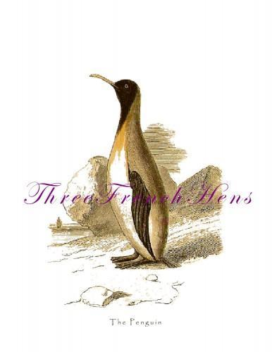 Victorian Penguin Natural History Stationery Note Flat Set