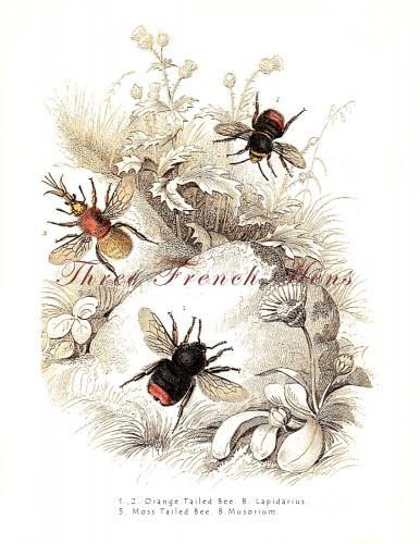 Victorian Bumble Bee Natural History Stationery Note Flat Set