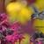 nature photography prints, small desk art, Minnesota art print 5x7, gift for