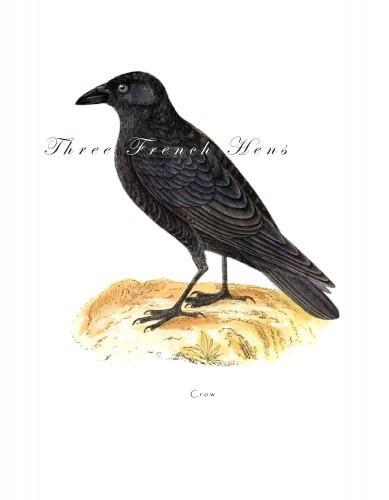 Victorian Crow Natural History Stationery Note Flat Set