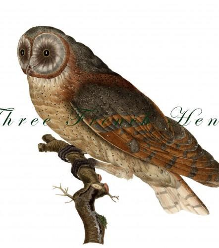 Victorian Barn Owl Natural History Stationery Note Flat Set