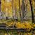 Aspen Grove, Flagstaff, Arizona
