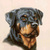 Rottweiler Cross Stitch Pattern***LOOK***X***INSTANT DOWNLOAD***