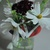 Flower Frog - fits on wide mouth canning jar or vase - red black and white -