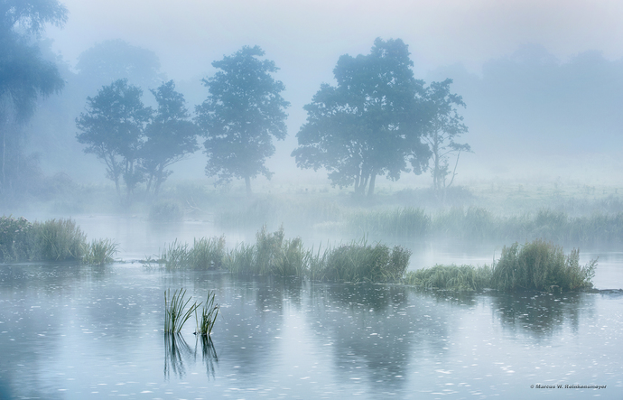 A moody landscape photo of the Shannon River, Ireland, in heavy fog. Image shows
