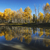 Aspen trees in vibrant autumn colors, reflected in clear waters in Northern