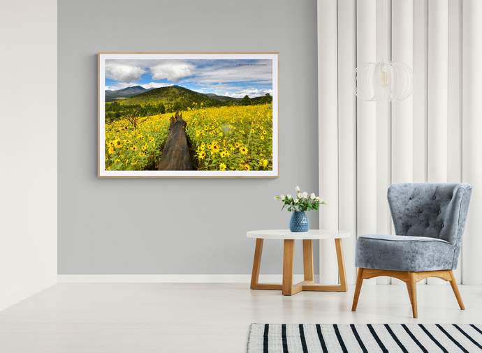 Vibrant Sun Flowers blanket the mountainside in Northern Arizona. Image shows