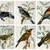 Bits of Birds Cut Apart Sheets Ephemera Printable Junk Journal