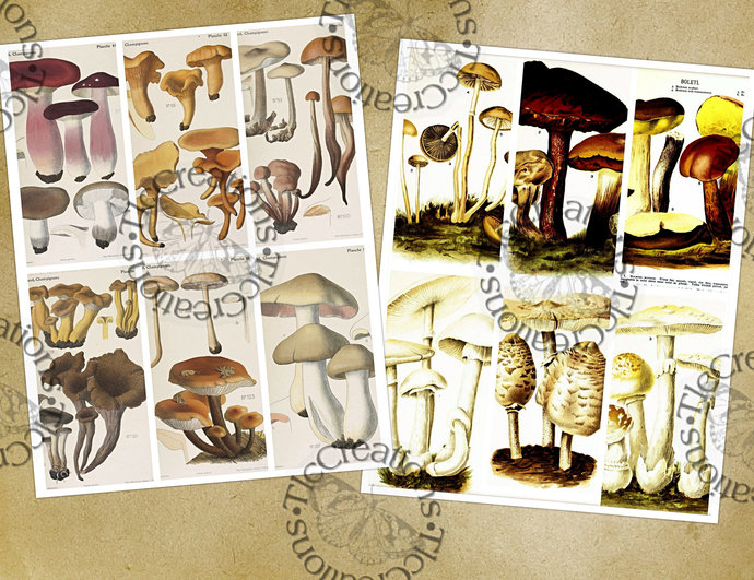 Mushroom Cut Apart Sheet Vintage ATC Cards Junk Journal