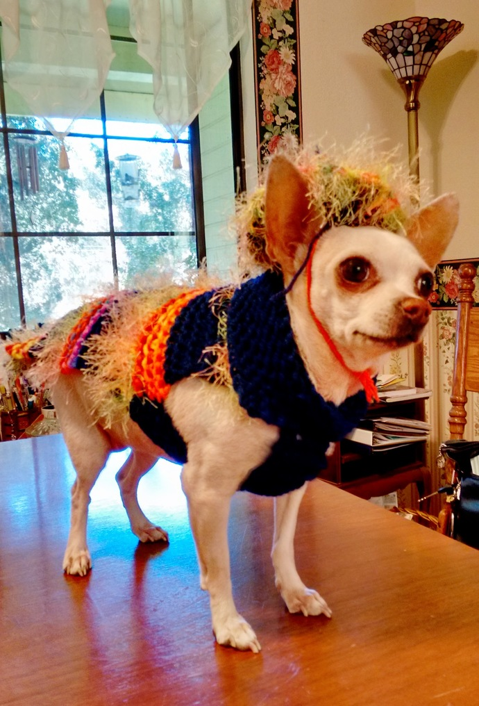 Colorful, Fun, Cinco de Mayo Sweater, Multi-Colored Stylish Dog Hat and