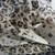 Home Decor, Yardage, Vintage, Home & Living, Leopard, Sheer, Fabric, Black,