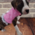 Pink Dress/Harness/Vest/Jacket, Party Dress, Special Occasion Wear, Small Pet