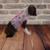 Pink Princess Harness Dress/Vest/Jacket, Party Dress, Special Occasion Wear,