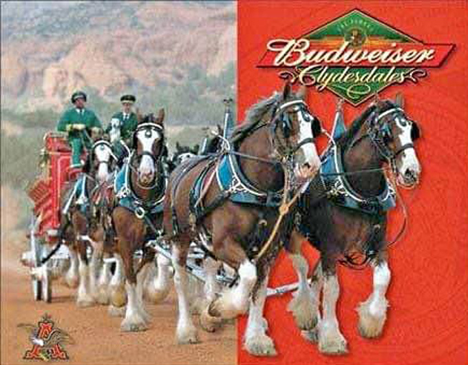 Budweiser Clydesdales Cross Stitch Pattern***LOOK***X***INSTANT DOWNLOAD***
