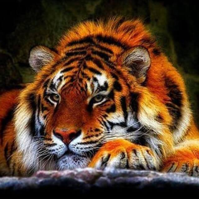 TIGER (3) XSTITCH KIT