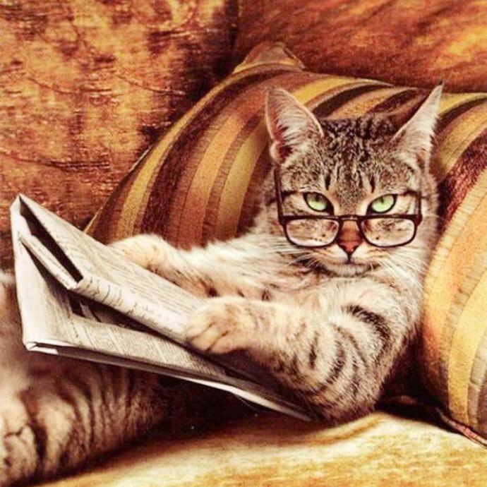 CAT NEWS XSTITCH KIT