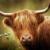HIGHLAND COW (2) XSTITCH KIT