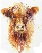 HIGHLAND COW (5) XSTITCH KIT
