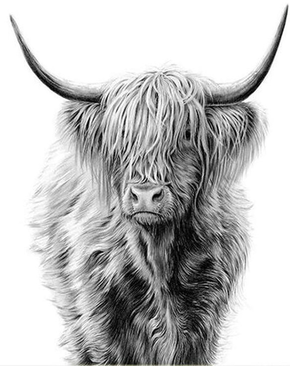 HIGHLAND COW (8) XSTITCH KIT