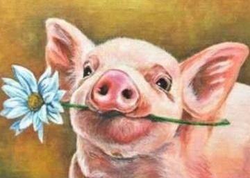 PIG (D) XSTITCH KIT