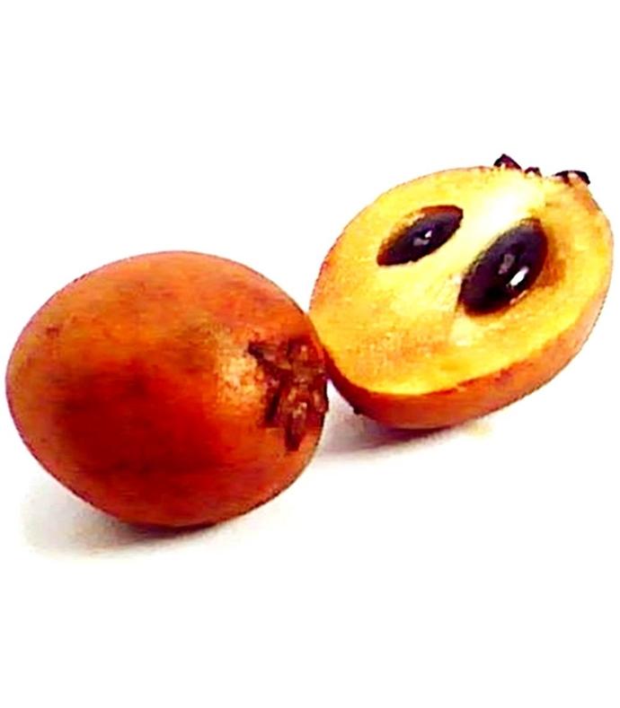 sapodilla Manilkara zapota 10 Seeds