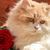 Cat And The Red Rose Cross Stitch Pattern