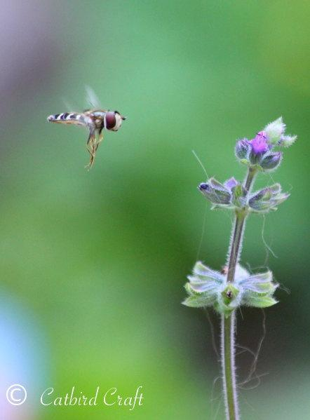Photographic Print: Hoverfly