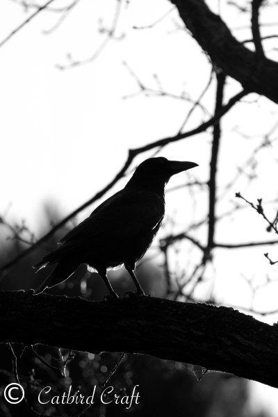 Fine Art Photographic Print, Peckham Crow