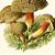 Edible Mushrooms 1924 German Roman Schulz Antique Botanical Lithographs, Pl